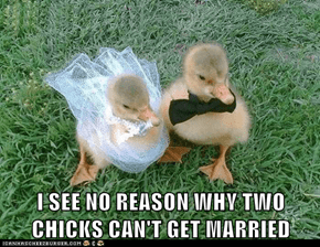 I SEE NO REASON WHY TWO CHICKS CAN'T GET MARRIED