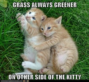 GRASS ALWAYS GREENER  ON OTHER SIDE OF THE KITTY