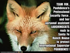 """POOHDENCE NEWS:  Team Fox CEO Foxkatt assures fans """"Poohdence is safe.  We remember the kidnapping."""""""