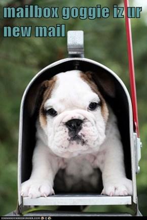 mailbox goggie iz ur new mail