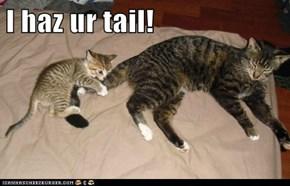 I haz ur tail!