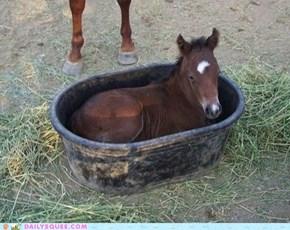 Horsey in a Bucket