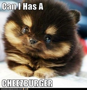 Can I Has A  CHEEZBURGER