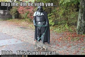May the 4th be with you....  Uhhh... This is not my cat...