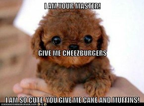 I AM YOUR MASTER! GIVE ME CHEEZBURGERS I AM SO CUTE, YOU GIVE ME CAKE AND MUFFINS!