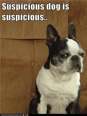 Suspicious dog is suspicious..