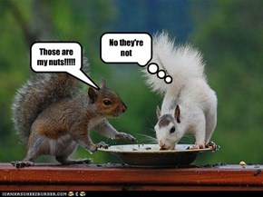 Those are my nuts!!!!!