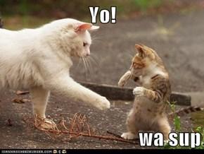 Yo!  wa sup