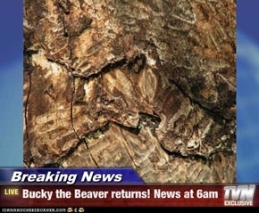 Breaking News - Bucky the Beaver returns! News at 6am