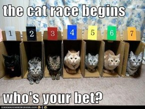 the cat race begins  who's your bet?