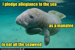 Underwater Poetry