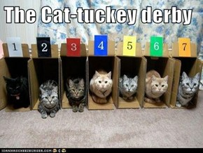 The Cat-tuckey derby