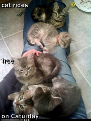 cat rides free on Caturday
