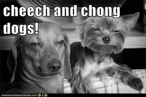 cheech and chong dogs!
