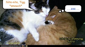 Kizzy now out-weighs Tigg & is a Big Girl now!