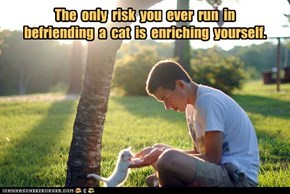 The  only  risk  you  ever  run  in   befriending  a  cat  is  enriching  yourself.
