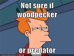 Not sure if woodpecker  or predator