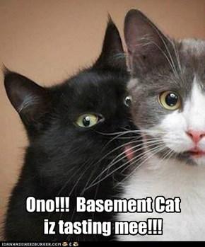 Ono!!!  Basement Cat  iz tasting mee!!!