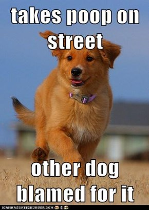 takes poop on street  other dog blamed for it