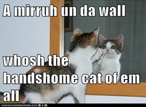 A mirruh un da wall  whosh the handshome cat of em all