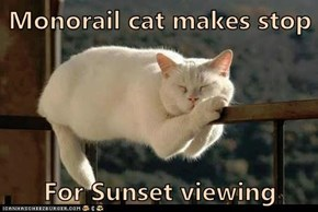 Monorail cat makes stop  For Sunset viewing