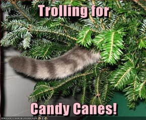 Trolling for  Candy Canes!