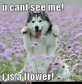 u cant see me!   i is a flower!