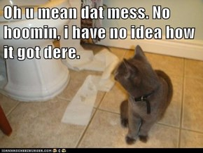 Oh u mean dat mess. No hoomin, i have no idea how it got dere.