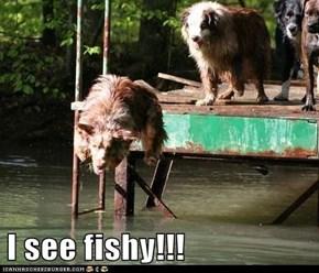 I see fishy!!!