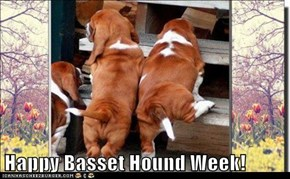 Happy Basset Hound Week!