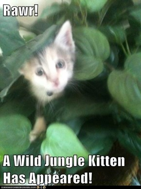 Rawr!  A Wild Jungle Kitten Has Appeared!