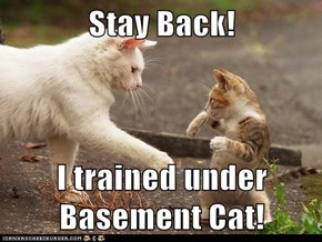 Stay Back!  I trained under Basement Cat!