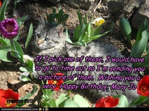 If I pick one of these, I would have to go to time out so I'm sending you a picture of them.  Wishing you a very  Happy Birthday, Mary Jo