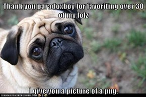 Thank you paradoxboy for favoriting over 30 of my lolz  I give you a picture of a pug.