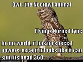 Owl : the Noctowl Animal Flying/ Normal type In our world, it has no special powers, except it looks like it can spin its head 360