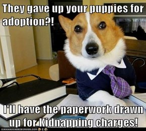 They gave up your puppies for adoption?!  I'll have the paperwork drawn up for Kidnapping charges!