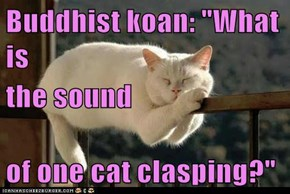 "Buddhist koan: ""What is the sound of one cat clasping?"""