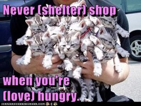Never (shelter) shop  when you're                                 (love) hungry.