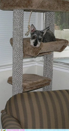 our dog, Sandy, in the cat tree
