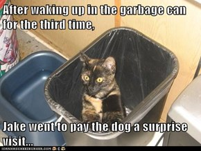 After waking up in the garbage can for the third time,  Jake went to pay the dog a surprise visit...