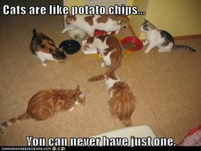 Cats are like potato chips...   You can never have just one.