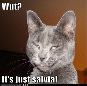 Wut?  It's just salvia!