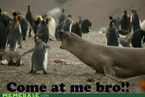 Penguin Rage!