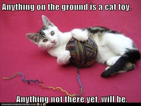 Anything on the ground is a cat toy.   Anything not there yet, will be.