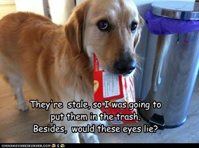 They're  stale, so I was going to put them in the trash. Besides,  would these eyes lie?