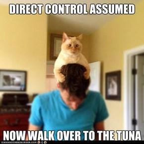 Control Cat