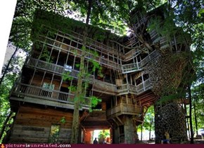 Dat Treehouse