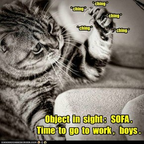 The right time, the right cat and the right tools for the job.