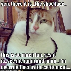 yep, there it is...the shoe lace..  this is so much fun, yes it is..see me jump and jump...I'm overwhelmed with excitement...