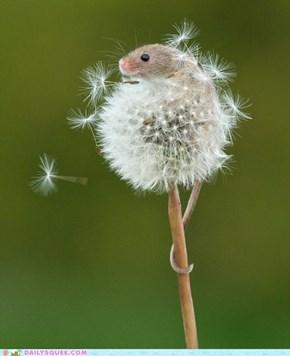 Dandelion Mouse